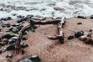 brown driftwood on bech line